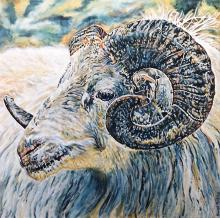Derby Ram by Sarah Perkins Art